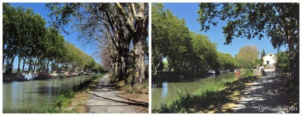 Le Canal du Midi (16/33), de Carcassonne à la jonction (2012) (7/7) : du Somail à l'embranchement